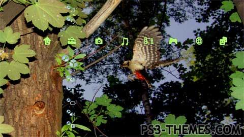 2388-bird.jpg