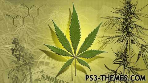 4006-marijuana.jpg