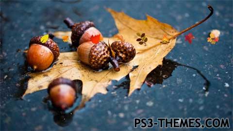 21739-Autumn1